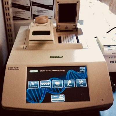 Thermal Cycler : Allows the amplification of extracted and purified DNA