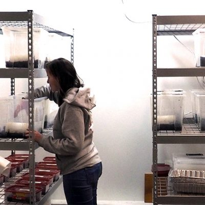 A breeding room where the temperature is controlled